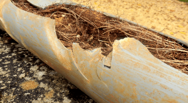 pipe infiltrated with tree roots